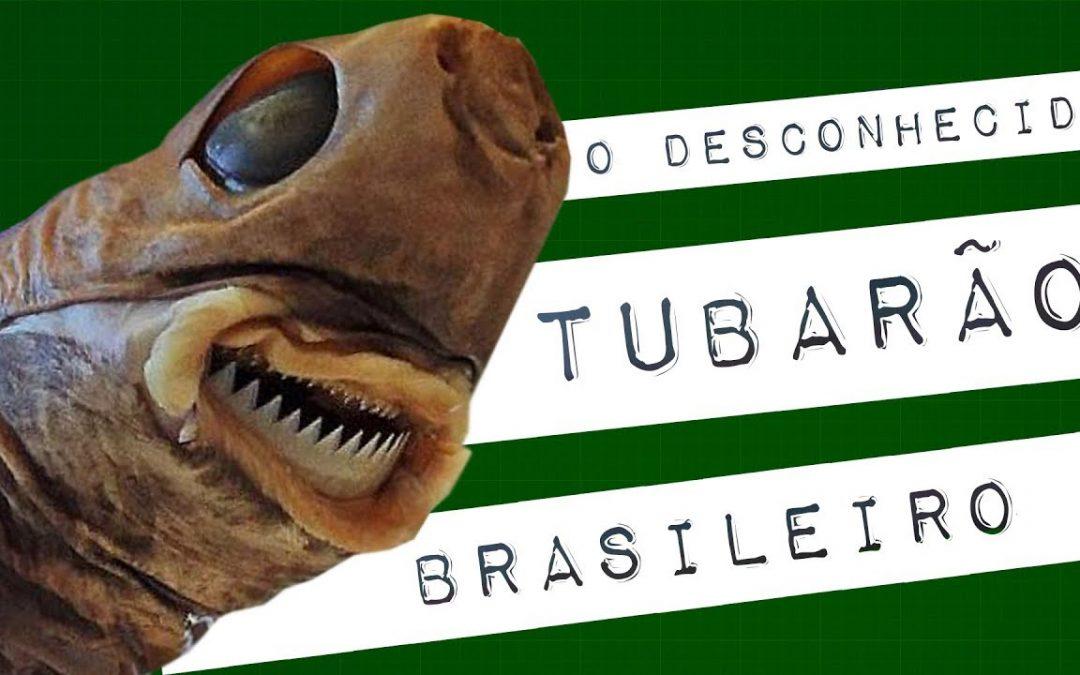 O DESCONHECIDO TUBARÃO BRASILEIRO #meteoro.exp