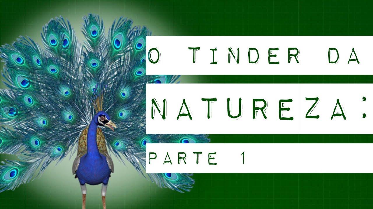 O TINDER DA NATUREZA: PARTE 1