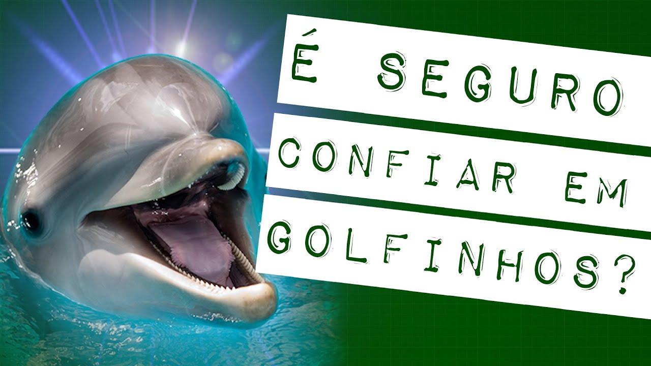 GOLFINHO É MESMO UM BICHO MAU-CARÁTER? #meteoro.exp